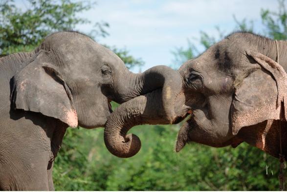 Elephants world rescue